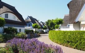 Die Siedlung mit den Häusern im Sommer